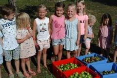 Appels rapen met de kinderen op het tentenveld. En dan een ijsje als beloning!
